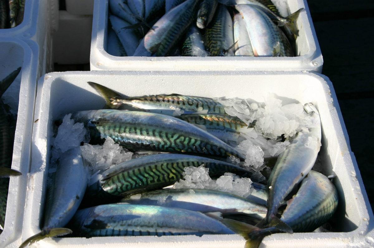 Caissettes de poissons - Port de Trouville