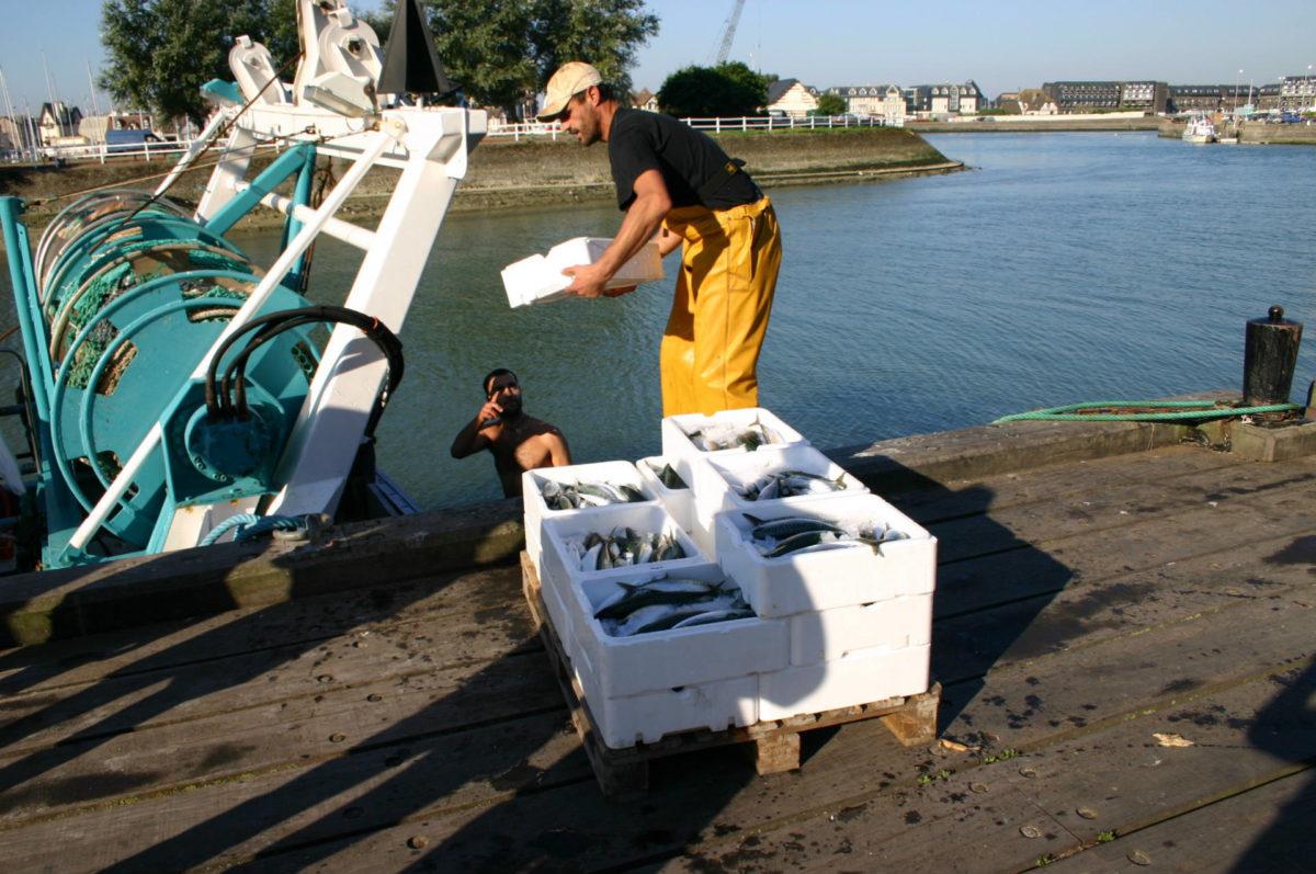Débarque de poisson dans le port de Trouville