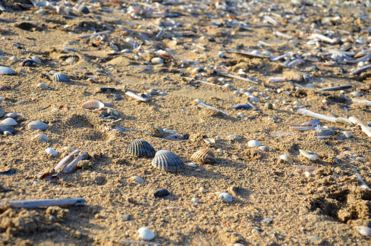 Réglementation sur la plage