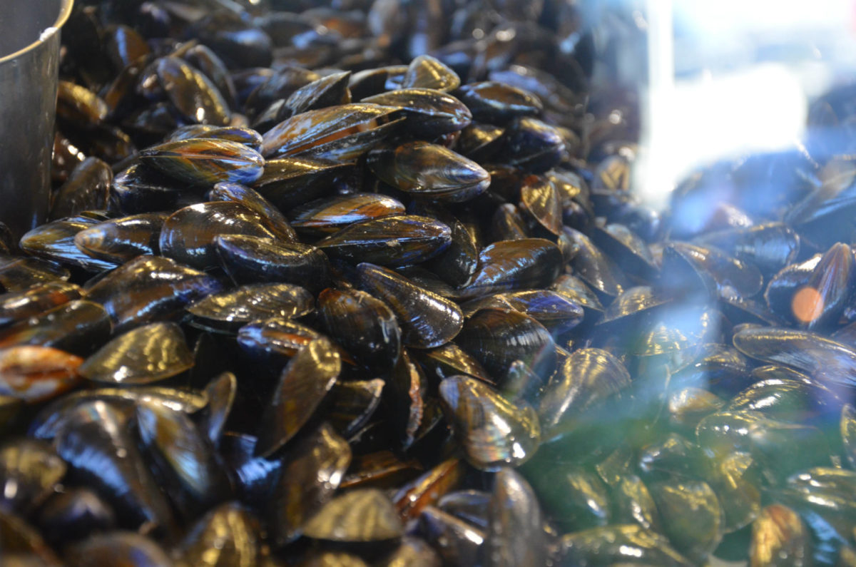 Moules sur les étals du marché aux poissons de Trouville