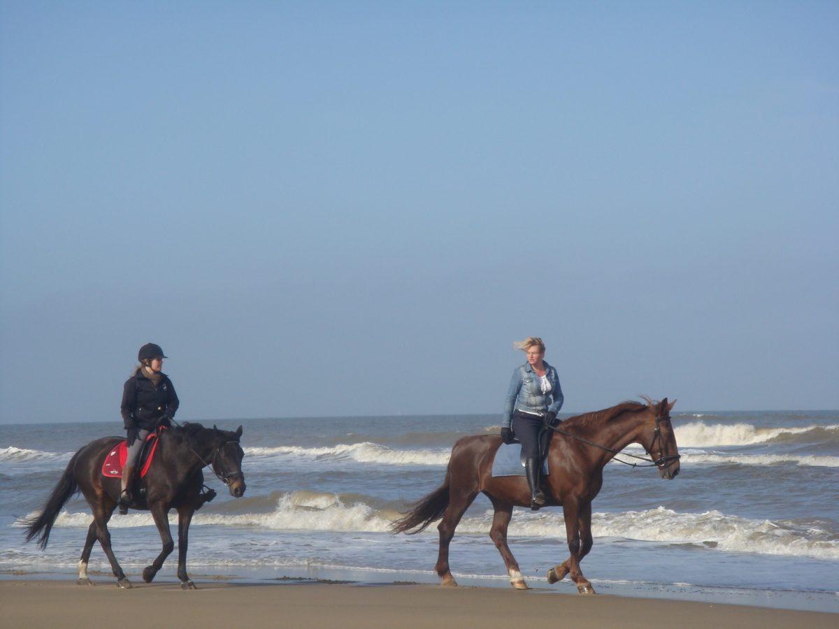 Réglementation chevaux sur la plage