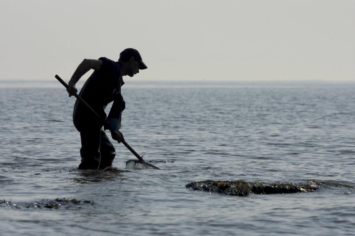 Réglementation pêche à pied