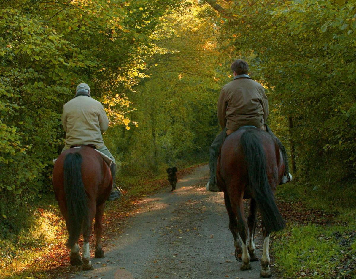 randonnée-à-cheval