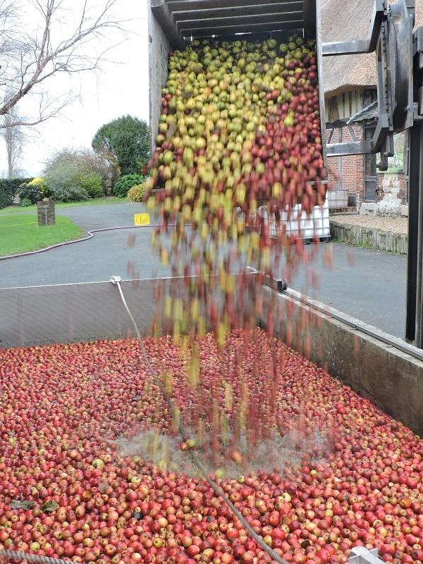 Brassage-des-pommes