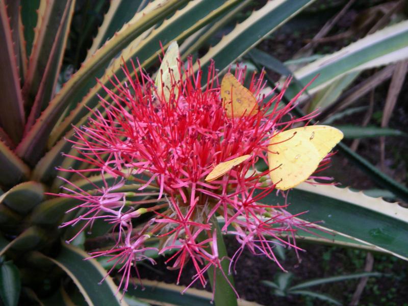 naturospace-honfleur-fleur