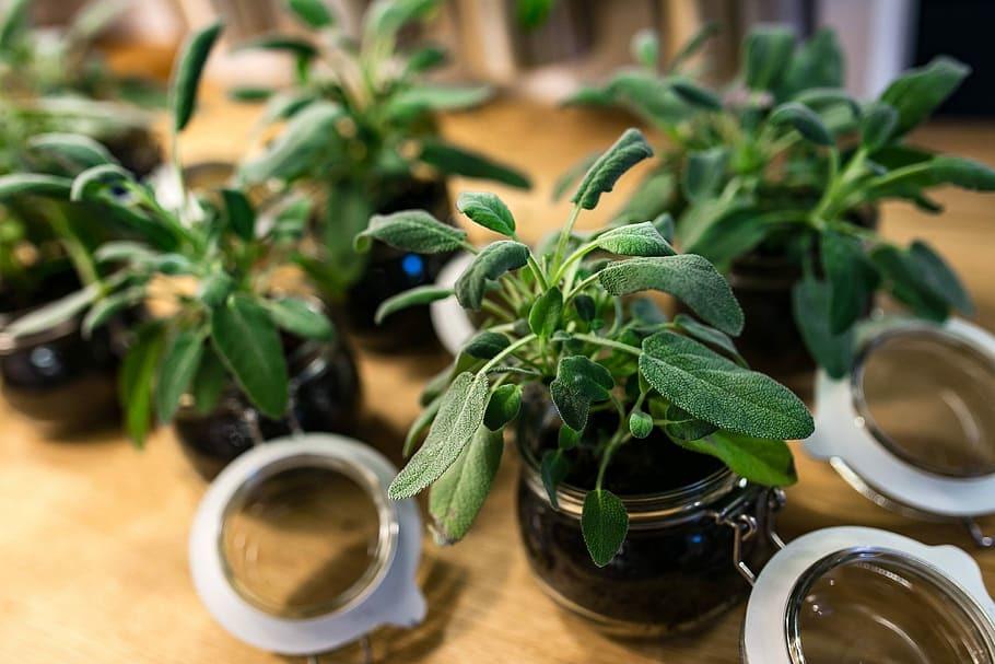 table-green-plant-pot